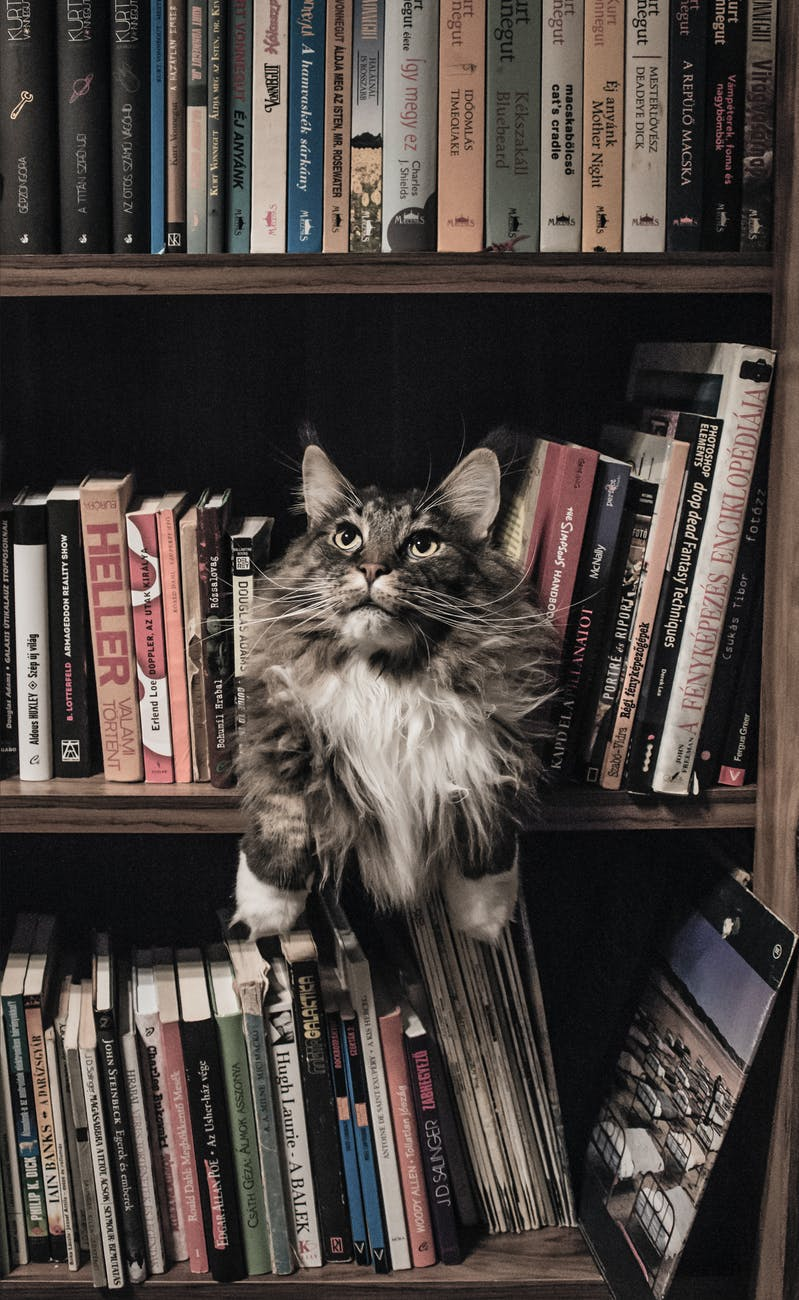 A cat sitting among books on a bookshelf, looking up.